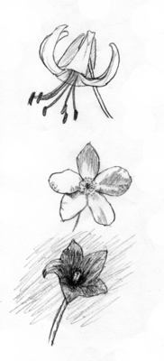 151014_flower.png