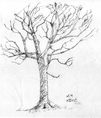 151026_tree_01.png
