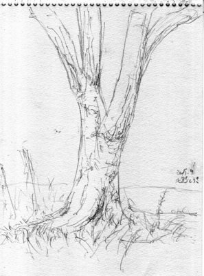 151026_tree_02.png