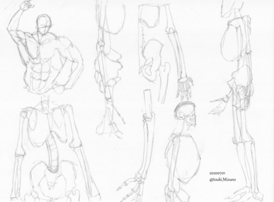 20200701_anatomy_02.png