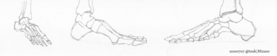 20200707_anatomy.png