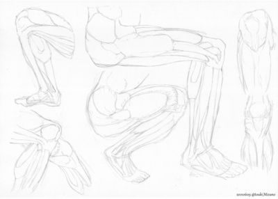 20210609_anatomy.png